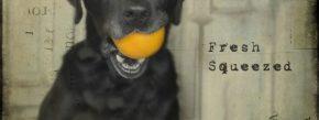 Fresh Pup