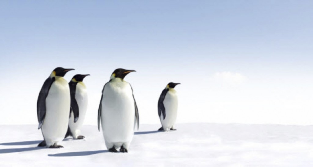 penguins-1024x548