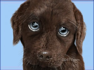 puppy-dog-eyes-300x225