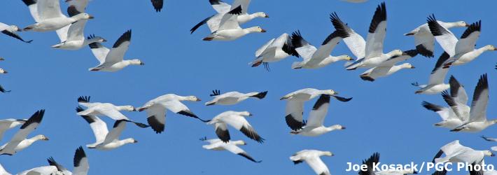 Fast Migration